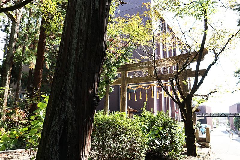 椎尾神社の鳥居